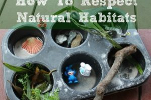 Learning About Respecting Natural Habitats: Simple Activity for Preschoolers
