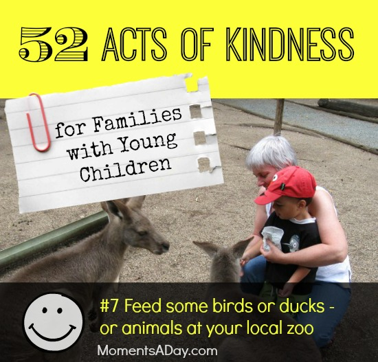 52 Acts of Kindness - #7 Feed some birds or ducks - or animals at your local zoo