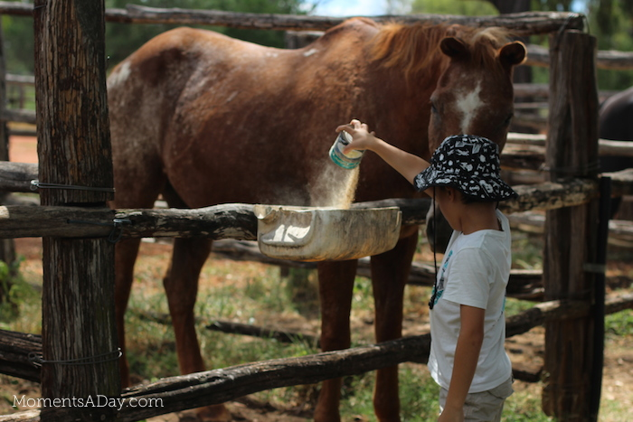 Why you should take your kids to a farm and what they will learn from the experience