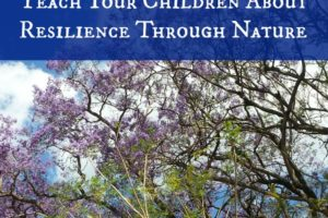 Learning About Resilience Through Nature